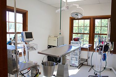 vet surgery