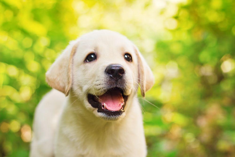 happy dog in the garden