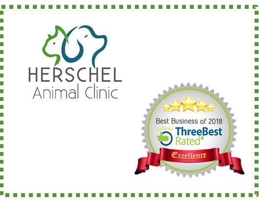 Best Veterinary Clinics in Jacksonville - Herschel Animal Clinic