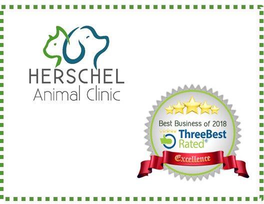 Best Veterinary Clinics in Jacksonville - Herschel Animal Clinic