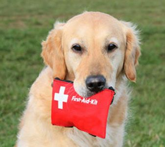 dog biting a first aid kit