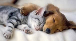 puppy and kitten sleeping on the bed