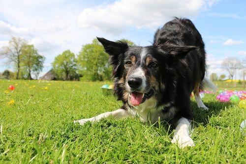 playing dog