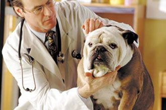 Get your pet examined today