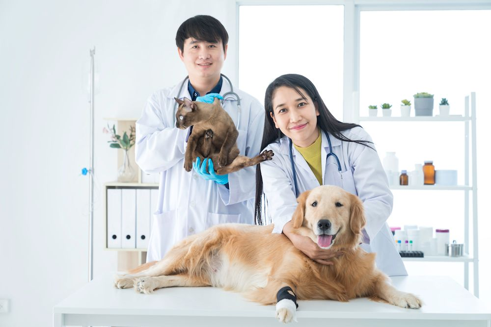 Frequently Asked Questions about Pet Wellness Exams
