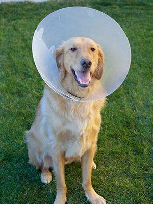dog with e collar