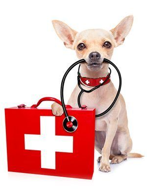 dog with first aid