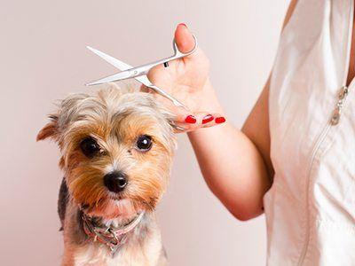 dog groomed by a vet
