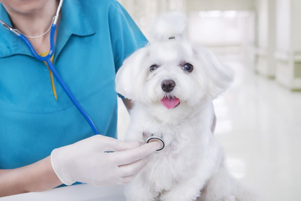 cat in a veterinary clinic