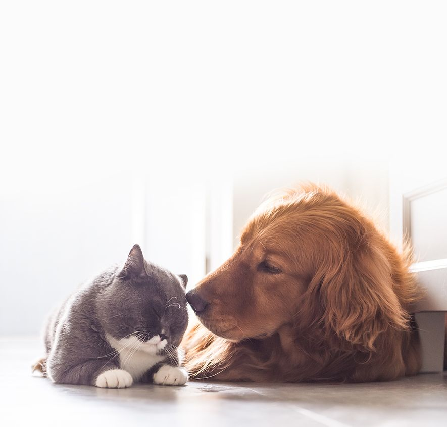 Dog sniffing a happy and calm cat