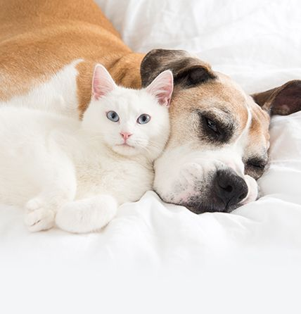 Dog and cat relaxing on the bed