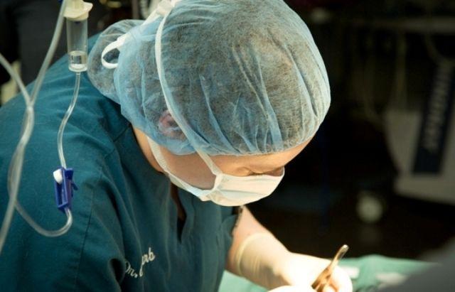 pet surgeon