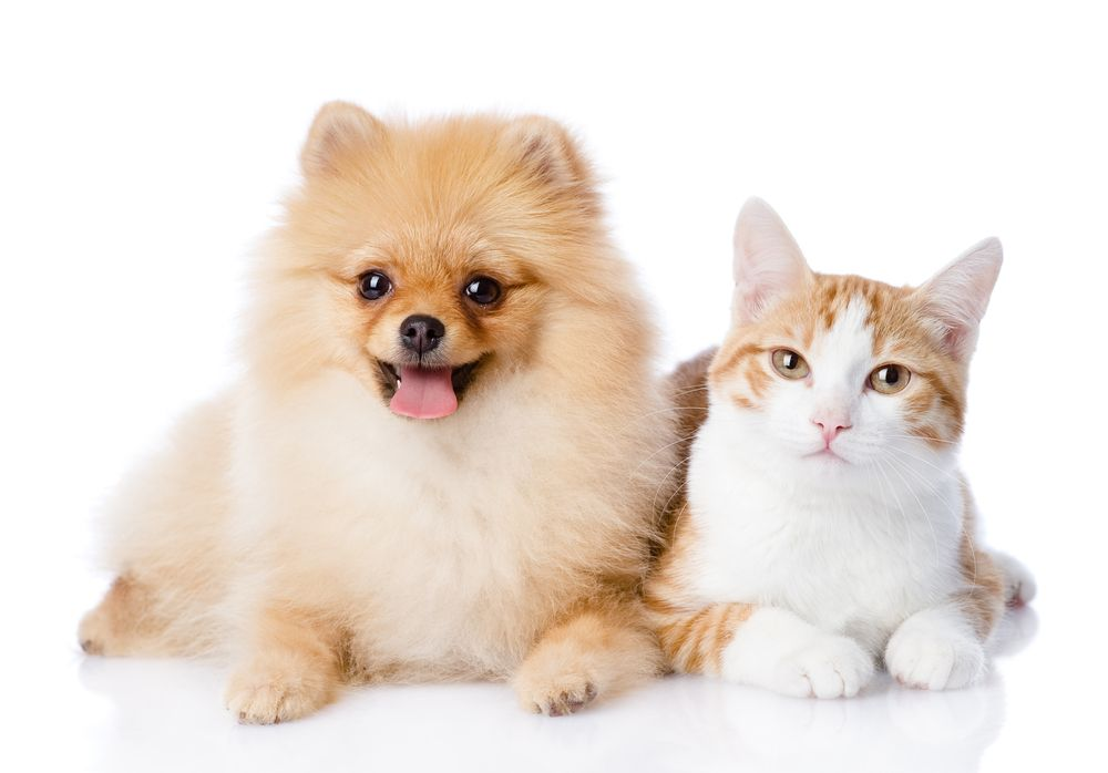 Why You Should Microchip Your Pet