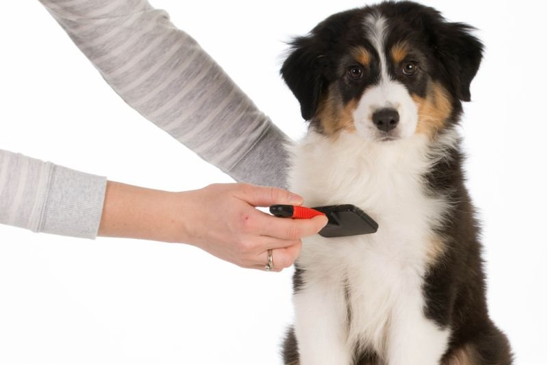 dog grooming penn valley ca