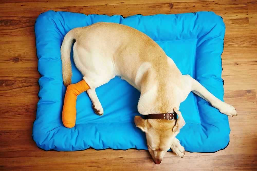 pain management for pets near me