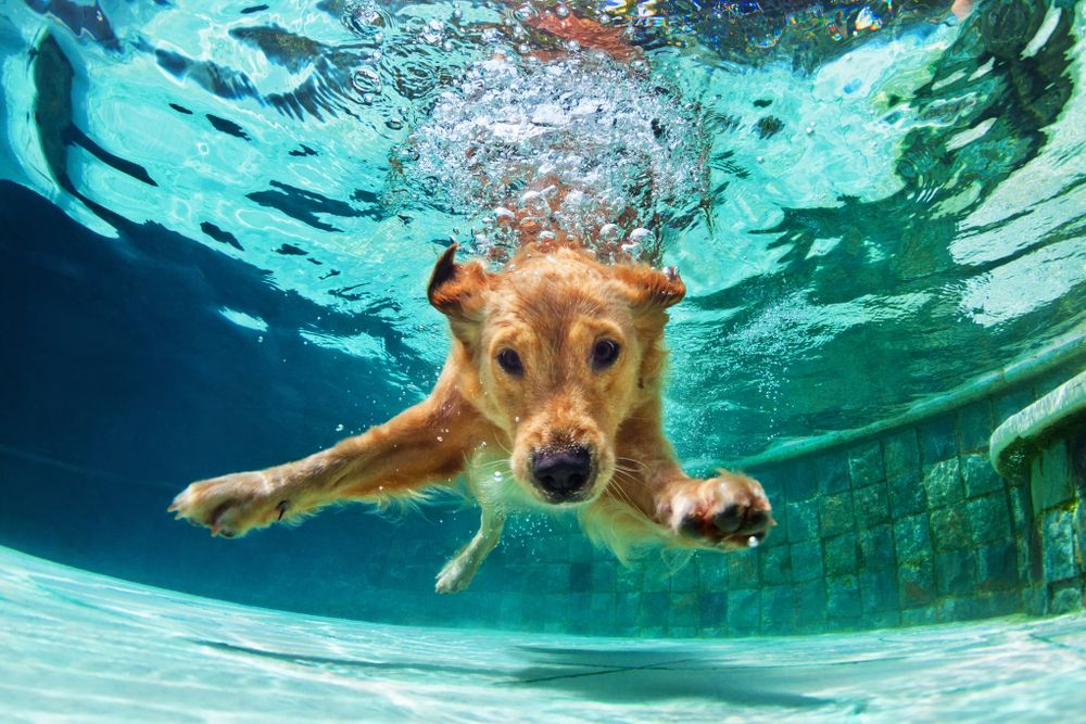 Hip Dysplasia in Dogs and How Water Therapy Can Help