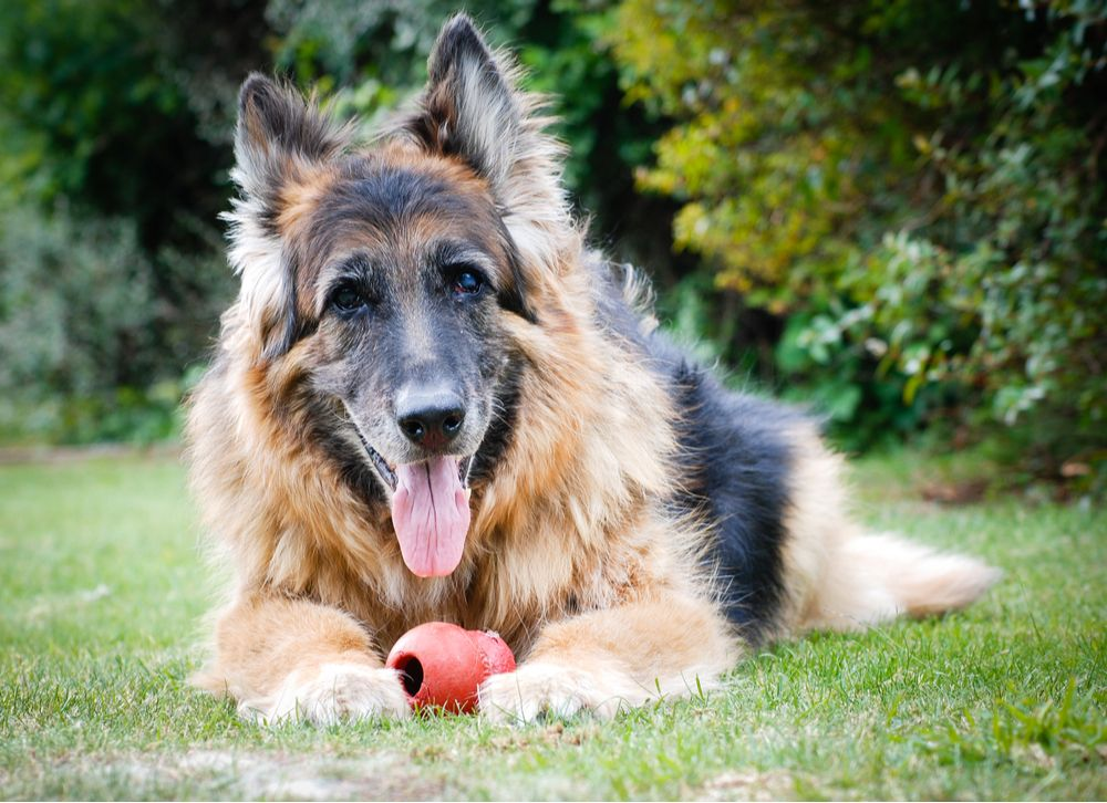 Treating Pet Arthritis