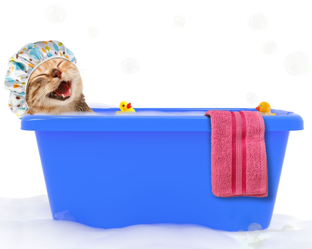 smiling cat in a bath tub