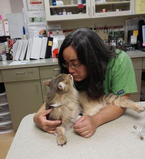 feline vaccine promo