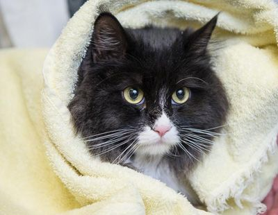 black cat in a blanket