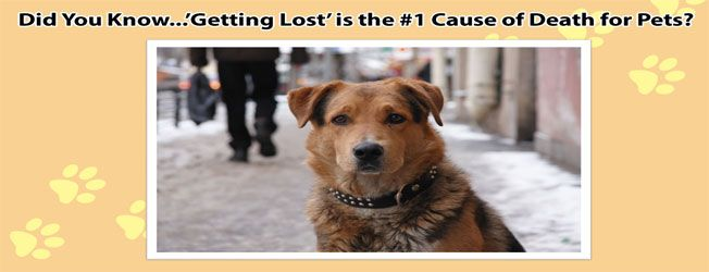 Keep Your Pets Protected from Getting Lost - Save on Microchips & Collars