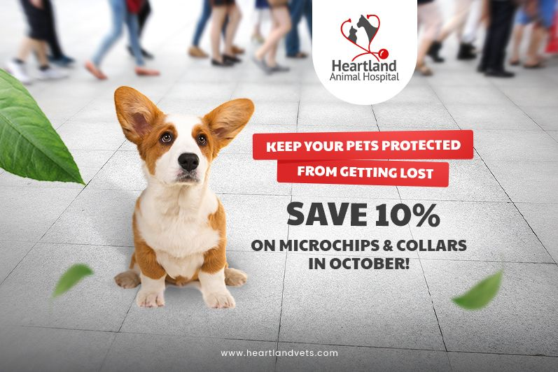 Microchip special