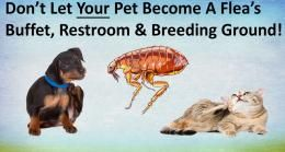 Save Money While Protecting Your Pet From Fleas & Ticks