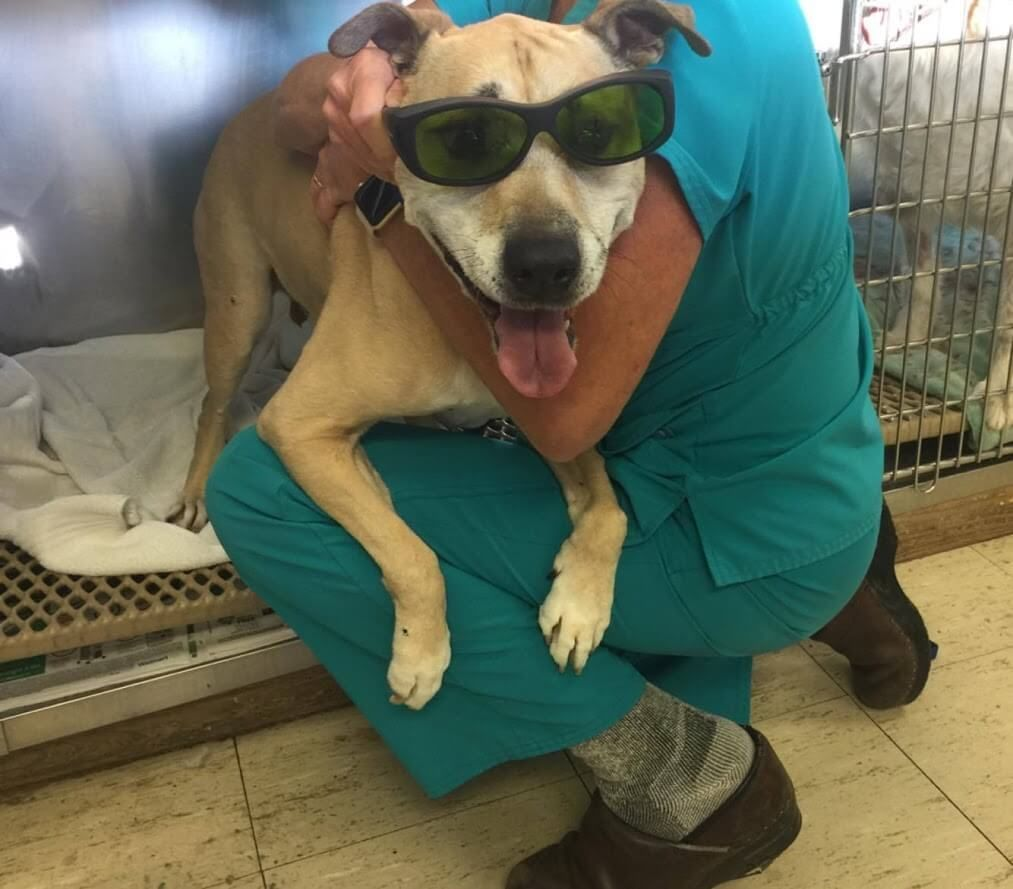 dog and vet with shades for laser therapy