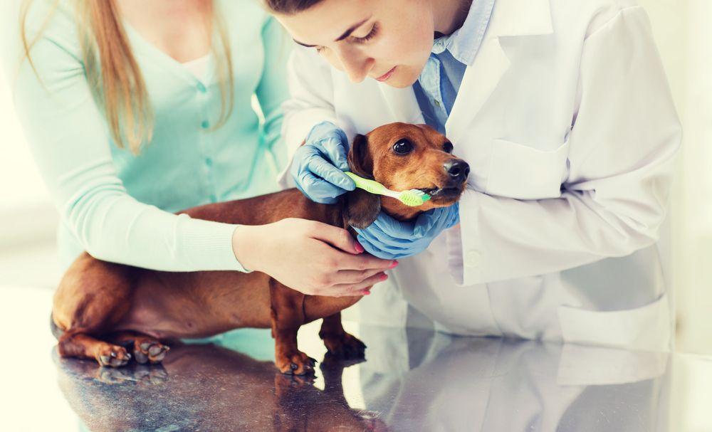 pet getting teeth cleaned