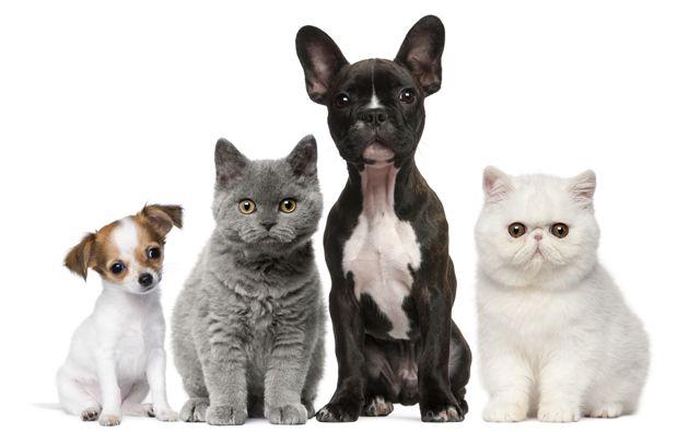 veterinarian in las vegas
