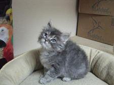 veterinarian for cats in nevada