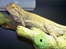 reptiles vet nevada