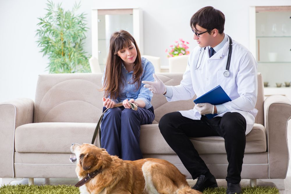 happy pet owner speaking with a vet