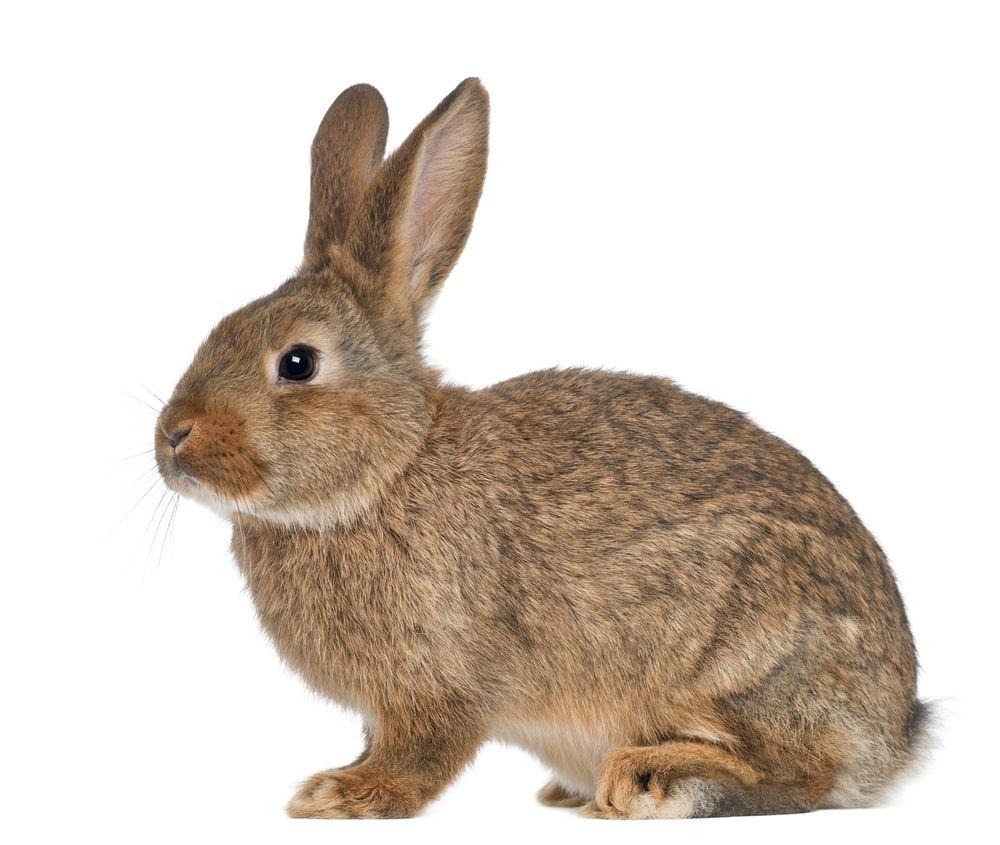 rabbit standing still