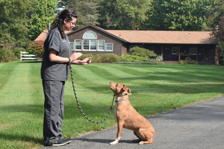 Value of Behavior Counseling for Pets