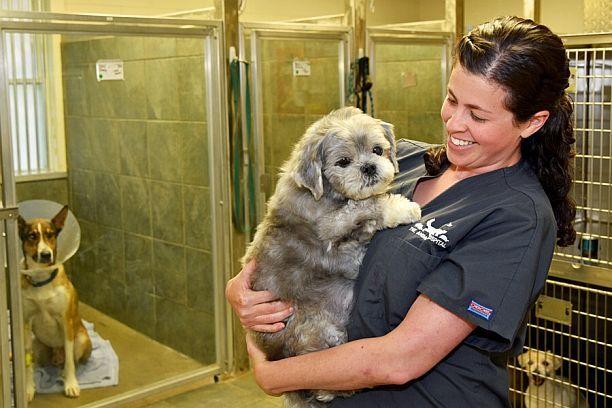 happy pet with vet