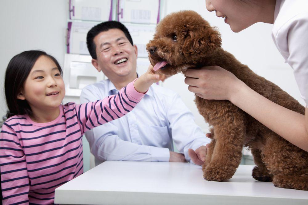 The Animal Hospital - Wellness Exams