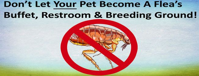 What is the Best Flea & Tick Prevention? Protect Your Pet, Home & Family from Parasites