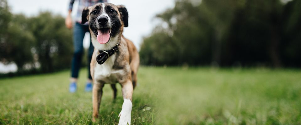 Happy dog in the field