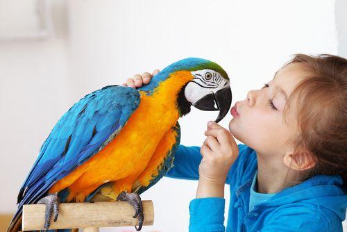 Adopt a Bird Month