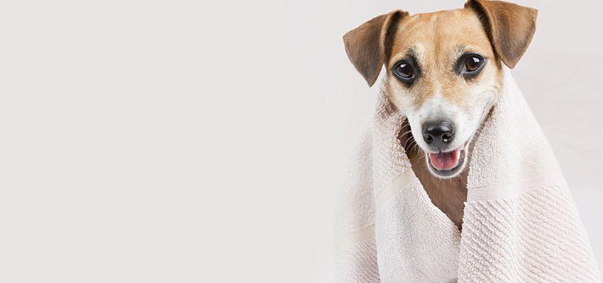 Veterinarian Yuma AZ - Full-Service Pet Care | Desert