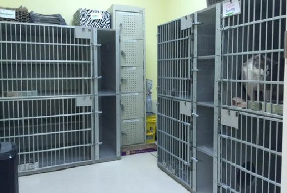Cat Room - Waffles keeps our feline boarders company in our special cat area. Cats have special kitty condos!