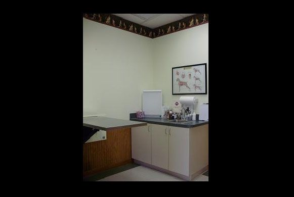 Exam Room 2 - Dogs or cats may visit us in here.