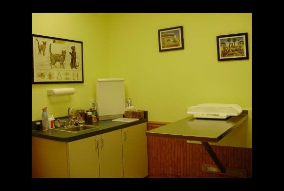 Exam Room 3 - Our feline friends have a special place in our hearts, so they have a room just for them.