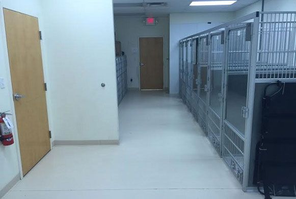 Kennel Runs - Many times our own dogs will visit in these runs.