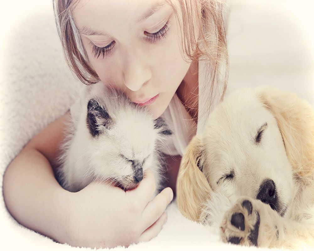 Puppy & Kitten Plans