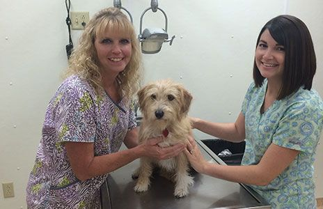 Our Services At All Pets Veterinary Hospital Veterinary Services In Grinnell