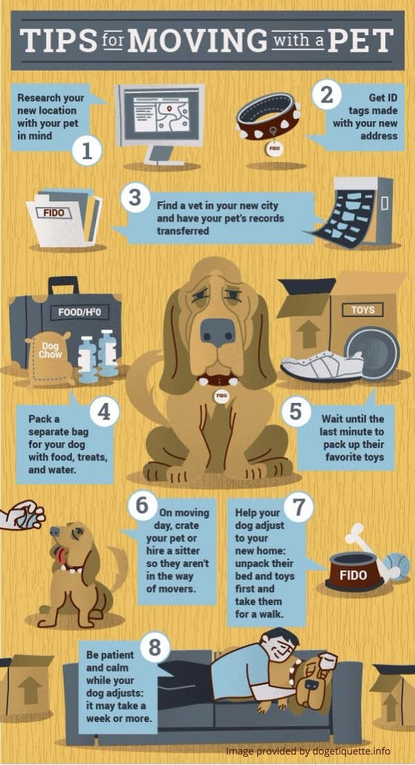 Tips For Keeping Your Dog Happy During Your Move To San Diego
