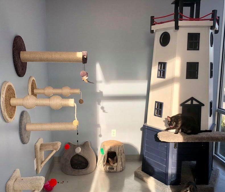 cat daycare