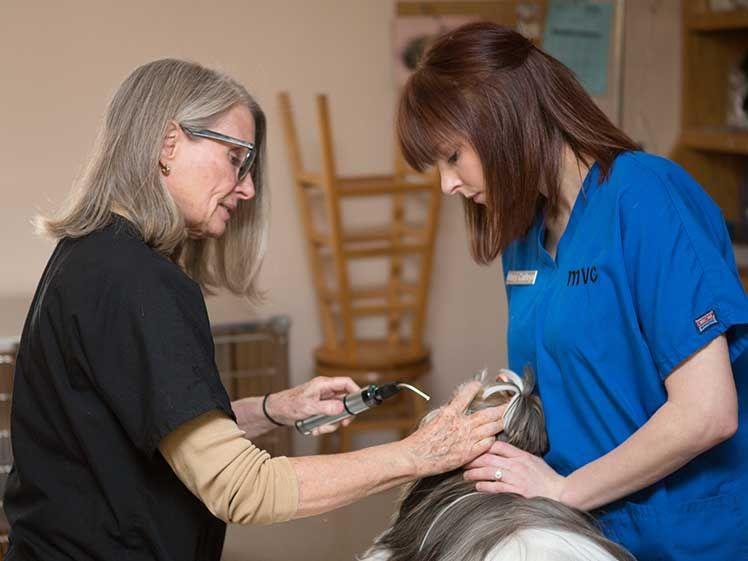 veterinarian with pet owner